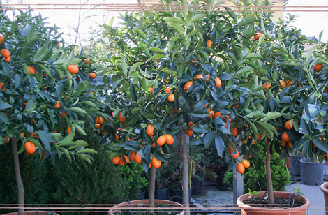 vendita piante frutto osimo vendita alberi da frutto ancona