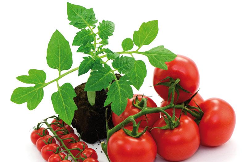 vivaio luchetti vendita piante da orto e sementi